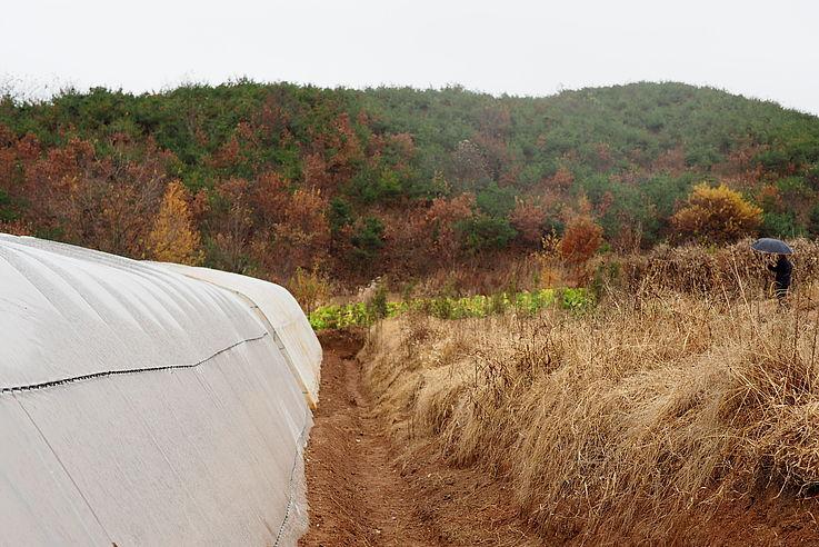 Model Reforestation Site in Sangseo-ri