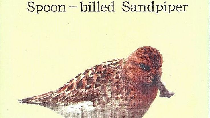 Raising Awareness about the Endangered Spoon-Billed Sandpiper