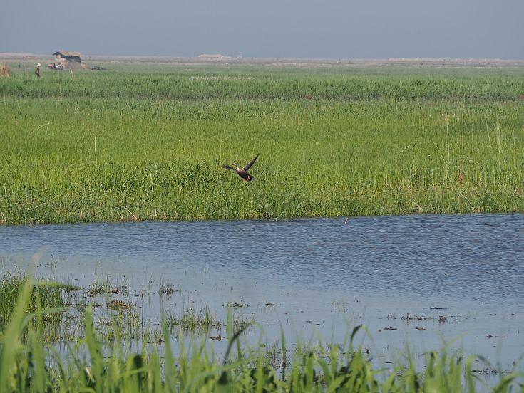 Wetlands in Nordkorea sind ein wichtiger Lebensraum für Tiere und Menschen.