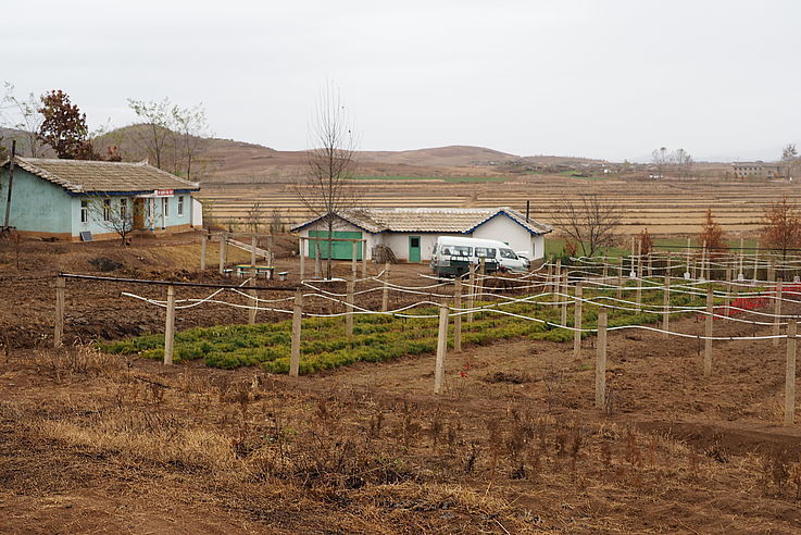 Young, small trees at the Model Reforestation Site in Sangseo-ri