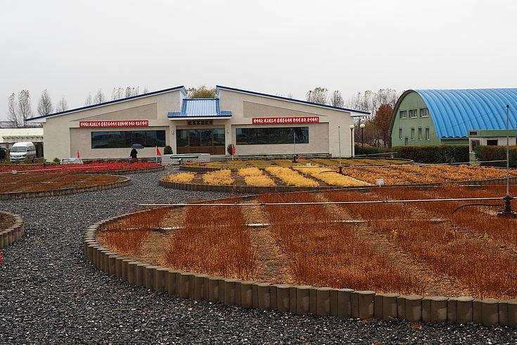 Zentrale Baumschule in Pyongyang