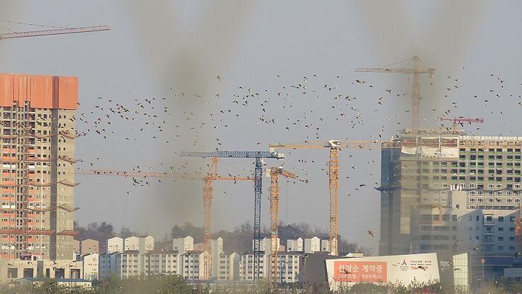 Umweltkooperation in Nordostasien