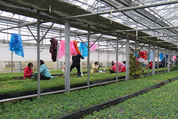 Inside a building of the Central Tree Nursery in Pyongyang.