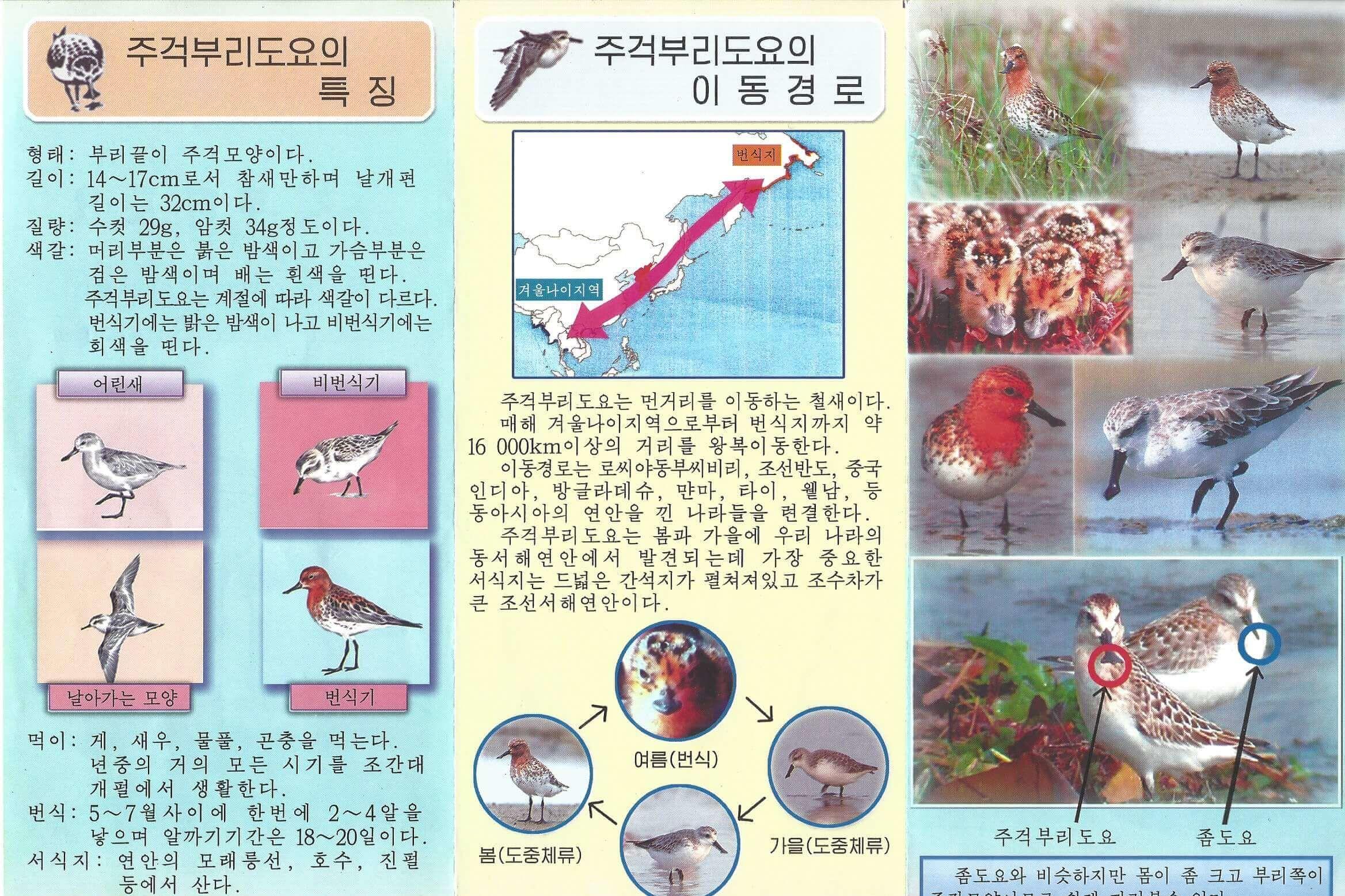 Die neue Broschüre informiert über die Eigenschaften und Lebensräume des Löffelstrandläufers.