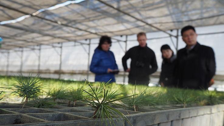 EU-finanziertes Projekt für nachhaltige Forstwirtschaft in Nordkorea