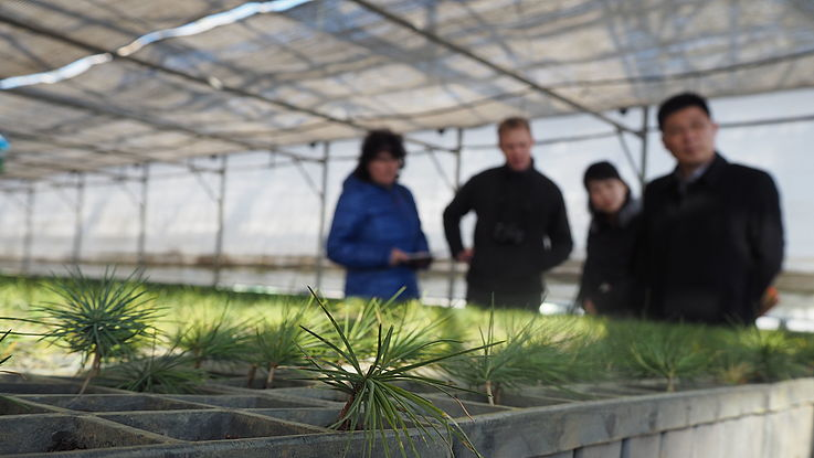 EU-funded Project on Sustainable Forestry in the DPRK