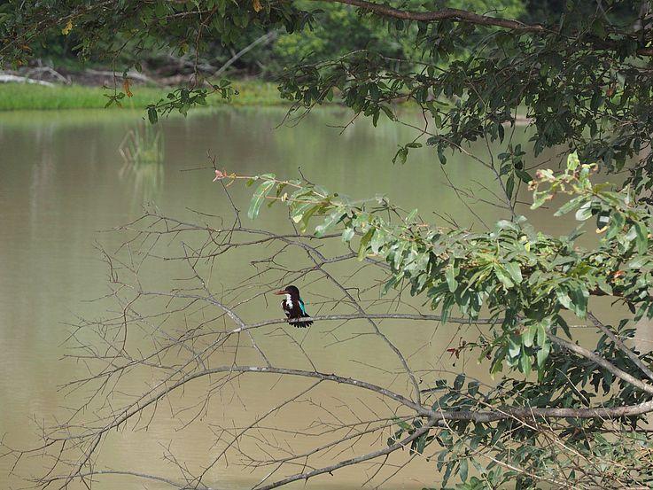 Impressionen der Besichtigung vor Ort im Wilpattu Nationalpark.