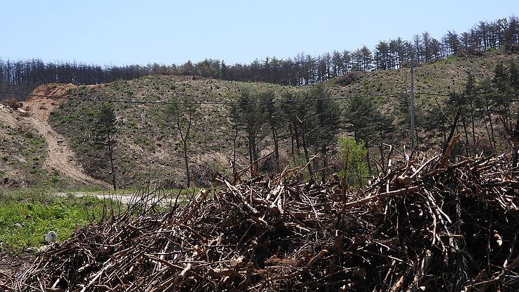 한반도 국경지역의 조림과 고성 방문